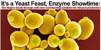 yeast feast